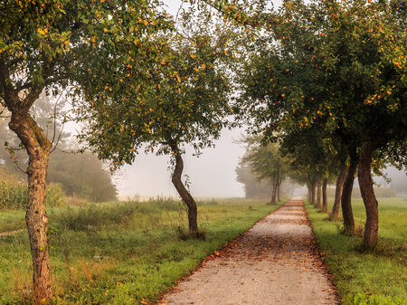 Picturesque Alley of Trees on an Autumn Road in german Bavaria. Slowly Color Changing Trees in Late September on the Avenue. Leaves on the Ground. Foggy Morning photo