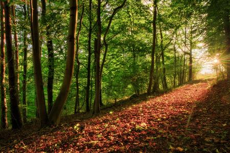 Enchanted Herfst Forrest Sunset. Zonnestralen in oktober. Gouden kleuren van de herfst. Lovely Evening Picture Stockfoto
