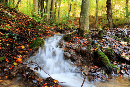 Idyllic Autumn Forrest Scene. Lovely Water Stream with fallen Leaves. Golden Colors of the Fall. Lovely Evening Picture photo