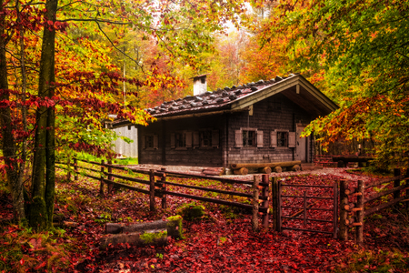 berchtesgaden: Idyllic Autumn Scenery at the lovely sea of kings in Berchtesgaden, Germany. Lovely colorful trees in Bavaria