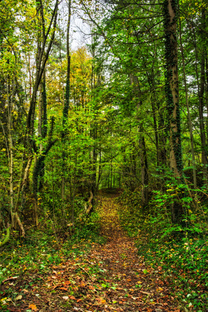 Idyllic Autumn Forrest Scenery photo