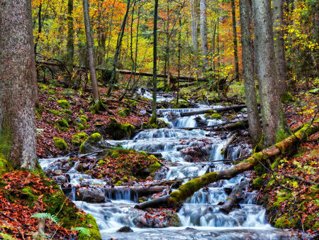 Autumn Forrest Creek in Berchtesgaden. Golden Colors of the Fall. Lovely Evening Picture from Bavaria photo
