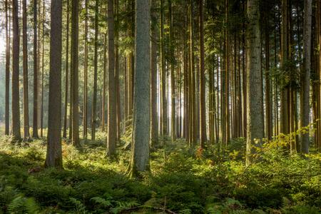 Zwarte Woud in Duitsland. Magische Autumn Forrest. Kleurrijke bladeren vallen. Romantische Achtergrond