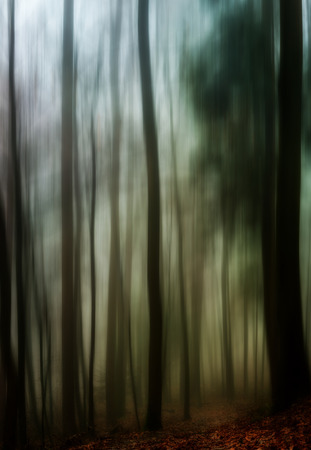 distorted image: Dark and Dreary Forest. Distorted Image of a spooky magical winter forest Stock Photo