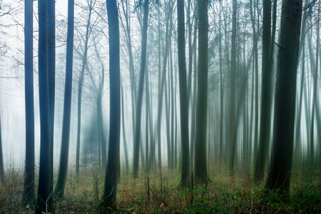 dreary: Dark and Dreary Forest. Distorted Image of a spooky magical winter forest Stock Photo