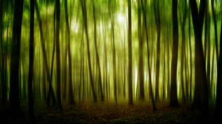 distorted image: Dark and Dreary Forest. Distorted Image of a spooky magical forest Stock Photo