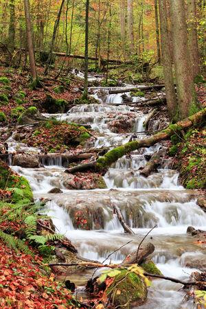 Idyllic Autumn Forest Scenery photo