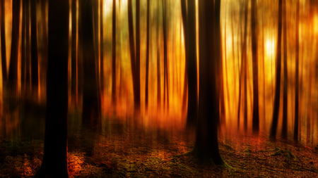 Black Forest in Germany. Orange Evening Sun shines through the golden foggy Woods. Magical Autumn Forrest. Colorful Fall Leaves. Romantic Background. Sunrays before Sunset photo