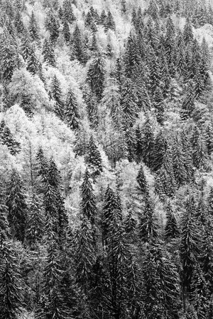 German Black Forest in Winter. Top Down View from the Feldberg Mountain during a Snow Storm. Winter Landscape. Black and White Vintage Picture photo