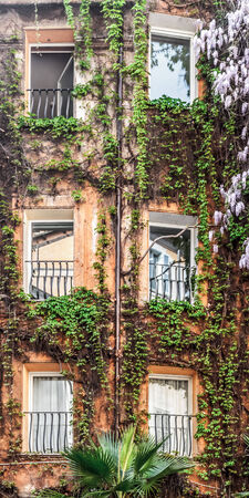 front house: Lovely House Front with Vines in Rome Stock Photo