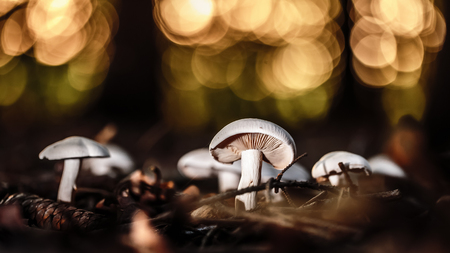 wild forrest mushroom in the woods of Bavaria in Germany in fall. Picture of the fungi with lovely bokeh was taken on a warm September day. photo