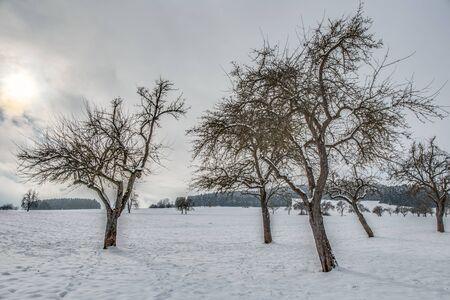 winter wonderland: Freddo paesaggio invernale innevato in Forrest Regione Nera in Germania. Solitudine dolce. Bianco e Lonely Landscape Archivio Fotografico