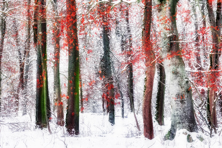 Winter Forest. Falling Snow through the January Woods after Sunset in the Black Forrest, Germany. Distorted edited image