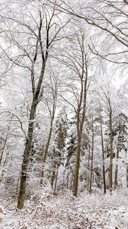 winter wonderland: Freddo paesaggio invernale innevato in Forrest Regione Nera in Germania. Solitudine dolce. Bianco e Lonely Paesaggio con percorsi di trekking nella foresta collina