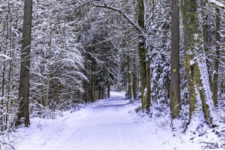trecking: Cold snowy winter wonderland in the Black Forrest Region of Germany. Sweet Solitude. White and Lonely Landscape