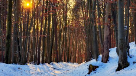 Winter Forest Sunset. Bavarian Woods at dusk in Germany. Lovely Orange Colors, barren trees and snow photo