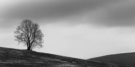 forlorn: Lonely Tree. Sweet Solitude. Cold and Cloudy day in the black forest region of Germany