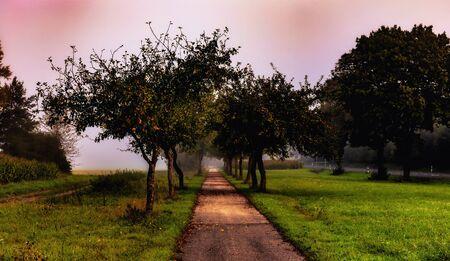 campagne rural: Automne Alley dans le paysage rural de la Franconie, Allemagne sur un matin brumeux septembre