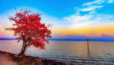 Lake Constance in Autumn Standard-Bild