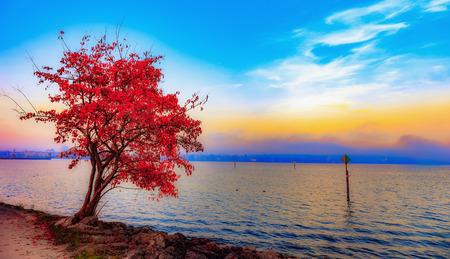 Lago di Costanza in autunno Archivio Fotografico - 43764746