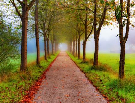 Herfst Steeg in het platteland van Franken, Duitsland op een mistige ochtend september