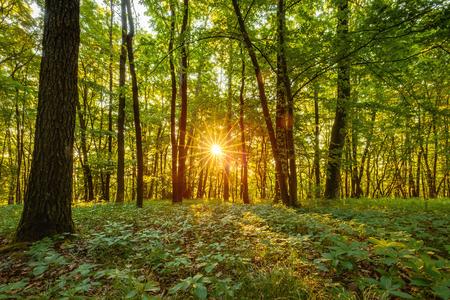 Summer Forrest Sunrise. Dawn in het bos van Beieren, Duitsland