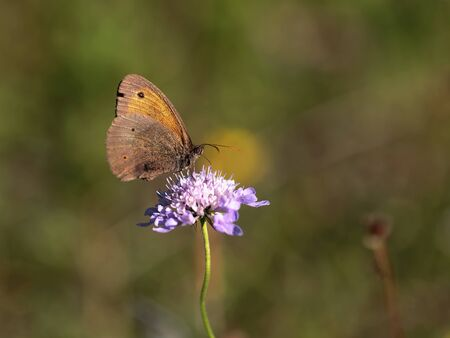 field depth: Butterfly Summer. Wildlife Macro with very Shallow Depth of Field