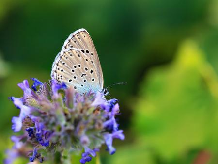tiefe: Schmetterling Sommer. Wildlife Macro mit sehr flachen Depth of Field