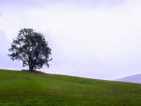 rural countryside: Lonely Tree on a wet summer day. Rural Countryside of Bavaria, Germany on a rainy summer day Stock Photo