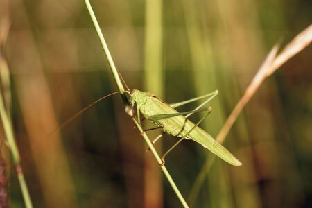 upper: Wild Insect in Upper Franconia Germany