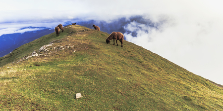 late summer: Sheeps grazing in the Karwendel Mountain Range. Alpine herd on a mountain top in Tyrol, Austria on a lovely late summer evening Stock Photo