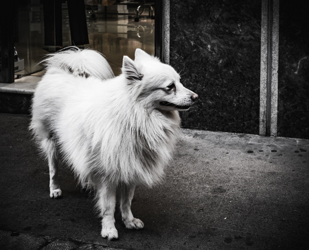 streetlife: Dog on the street Black and White
