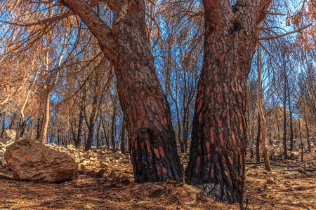 aftermath: Forest Fire Aftermath in Sicily, Italy. Summer Landscape of a burned forest, set in flames by arsonists on Monte Pellegrino near Palermo. Burned black and dead trees in mediterranean atmosphere Stock Photo