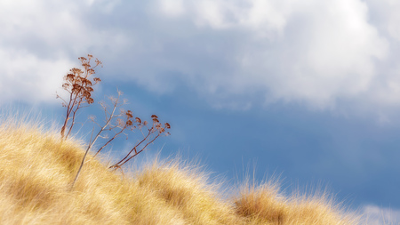 Lovely September Landscape with golden Meadow and Blue Sky on Sicily