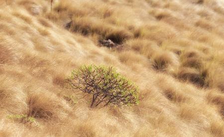 kleine struik buiten Palermo in het vroege herfst platteland met gouden gras Stockfoto