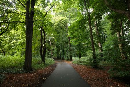 Wandeling in het bos van Wales. Mooi groen gebladerte