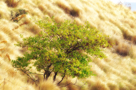 lovely green tree on golden autumn meadow outdoors of Palermo, Sicily Standard-Bild