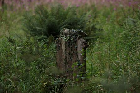 Facendo un'escursione nella campagna del Galles. Vecchia lapide marcia con verde troppo cresciuto Archivio Fotografico - 88061030