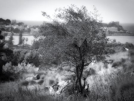 Zwart-witte geïsoleerde boom op het platteland van Sicilië Stockfoto