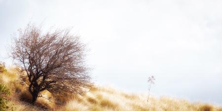 Albero solitario nel paesaggio collinare della Sicilia nel mese di settembre. Prato dorato Archivio Fotografico - 88060997