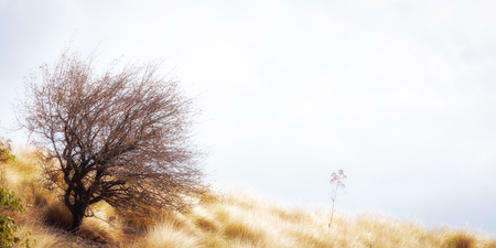 Lonely tree in the hill landscape of Sicily in September. Golden meadow
