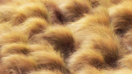 Lovely golden grass in the nature outside of Palermo, Sicily in Italy