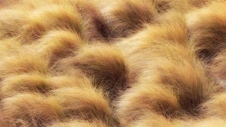 Mooi gouden gras in de natuur buiten Palermo, Sicilië in Italië
