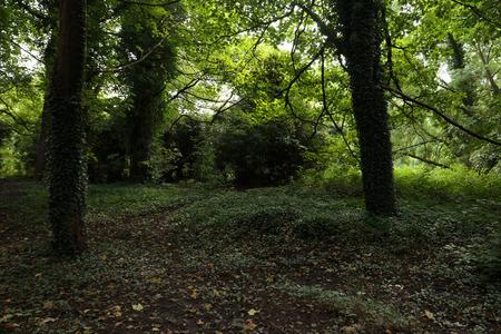 Park in een bos in Wales buiten Cardiff in augustus Stockfoto