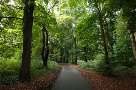 Estate tarda in una foresta nel Galles. Alberi e fogliame verde Archivio Fotografico - 88061002