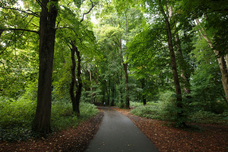 Late summer in a forest in Wales. Trees and green foliage Reklamní fotografie