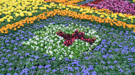 flowerbeds: Colorful flowerbeds in summer city.