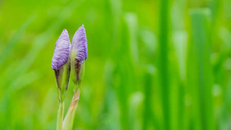 purple small flowers in Sunny weather. Stock Photo