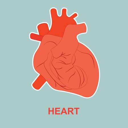 Internal human organ heart. Poster for medicine. Illustration