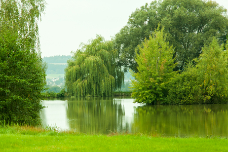 weeping willow: Weeping Willow Stock Photo